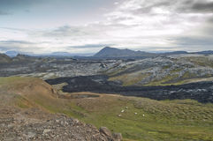 Sheeps in volcanic landscape Royalty Free Stock Photo