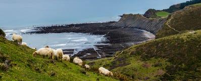 Sheeps in Zumaia. Flysch coast Stock Photo