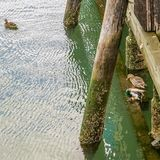 Sheepshead Bay, Brooklyn, US - Ducks under Ocean Avenue Pedestrian Bridge. stock photography