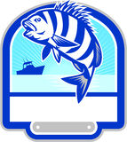 Sheepshead Fish Jumping Fishing Boat Crest Retro. Illustration of a sheepshead (Archosargus probatocephalus) a marine fish jumping up set inside shield crest Stock Photography