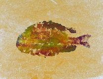 Sheepsheadfische lizenzfreies stockfoto