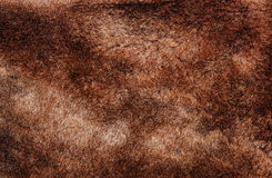 Sheepskin. Texture of real sheep's fur Royalty Free Stock Images