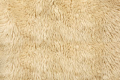 Sheepskin background in bright light Stock Photos