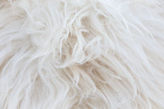 Sheepskin background Stock Photos
