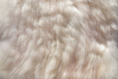 Sheepskin background Stock Photo