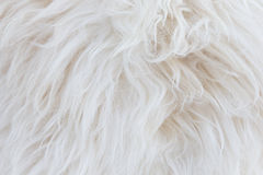 Sheepskin background Royalty Free Stock Images