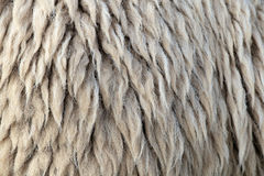 Sheepskin. Royalty Free Stock Photo