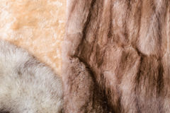 Sheepskin, Mink and Fox Furs Royalty Free Stock Images