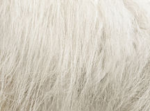 Sheepskin Royalty Free Stock Photography