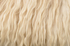 Sheepskin texture background Stock Images