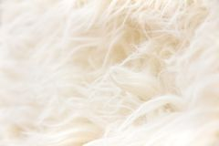 Sheepskin texture background Stock Image