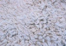 Sheepskin texture Background Royalty Free Stock Photo