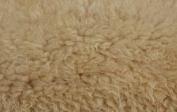 Sheepskin texture Stock Image