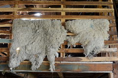Sheepskins drying in the barn farm estates Harberton. Stock Photography