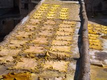 Sheepskins drying on a roof. Yellow dyed sheepskins drying on a roof in Fez Royalty Free Stock Photography