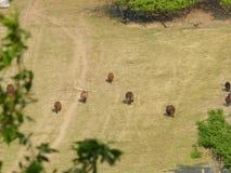 Sheepsträdgård arkivfoto