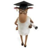 Sheepy graduate Royalty Free Stock Image
