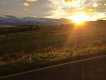 Sheepy-Sonnenuntergang lizenzfreie stockfotografie