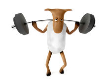 Sheepy and weights. Sheepy a funny character who likes fitness Stock Images