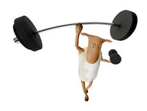 Sheepy and weights. Sheepy a funny character who likes fitness Royalty Free Stock Photography