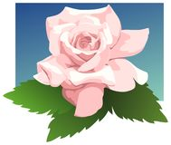 Sheer Bliss hybrid tea rose Stock Image