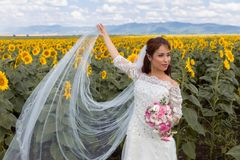 Sheer bridal veil in sunflower field Stock Photography