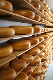 Shees on a shelf. On the cheese farm stock image