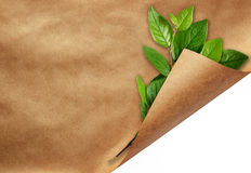 Sheet of craft paper with curled corner and green leaves Royalty Free Stock Image