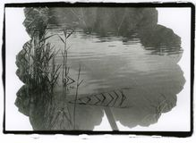 A sheet of geranium close-up and a landscape with a pond. Multiple exposure. Attention! The image contains granularity and other artifacts of analog stock photos