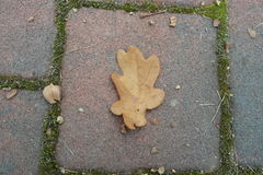 Sheet on the ground Royalty Free Stock Photography