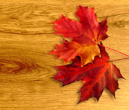 Sheet maple on background of the wooden structure. Red and orange sheet maple on background of the wooden structure stock images