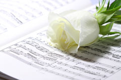 Sheet music white rose B Royalty Free Stock Photography