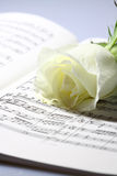 Sheet music white rose A Stock Photography