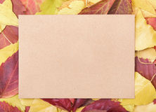 Sheet of paper on a autumn leaves. Stock Photography