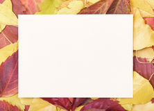 Sheet of paper on a autumn leaves. Stock Image