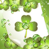 Sheet of paper and clover Royalty Free Stock Photo