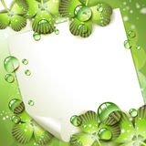 Sheet of paper and clover Stock Image