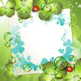 Sheet of paper and clover Stock Images