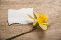 Sheet of paper and flower Royalty Free Stock Photography