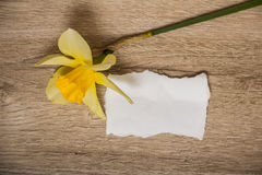 Sheet of paper and flower Stock Photos