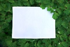 A sheet of paper on green leaves background Royalty Free Stock Photo