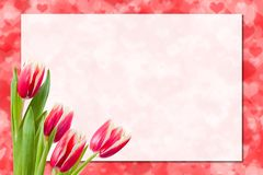 Sheet of paper and flowers. Sheet of paper and tulip flowers with places for your text Royalty Free Stock Image
