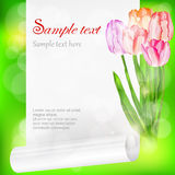 Sheet of paper and tulips on green Stock Photo