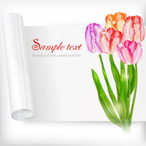 Sheet of paper and tulips on white Royalty Free Stock Photography