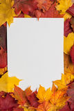 Sheet of paper on yellow autumn leaves. White sheet of paper on yellow autumn leaves Stock Photo