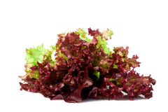 Sheet of red lettuce isolated on the white. Sheet of red lettuce rich iodine isolated on the white Stock Image