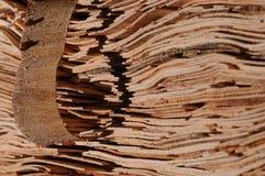 sheet trä Arkivbilder