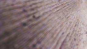 sheet trä Royaltyfri Fotografi