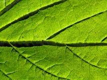 Sheet tree Royalty Free Stock Photos