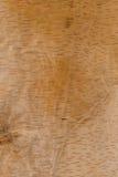 Sheet of Tree Bark Royalty Free Stock Images